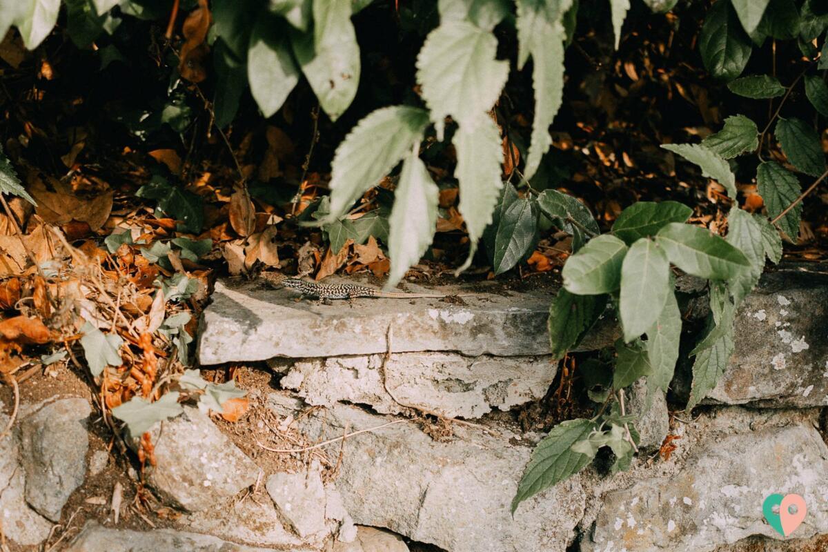 Giardino delle Rose Florenz